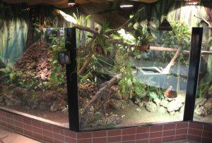 """Die neue Südamerika-Anlage im """"Warmhaus"""" ist fast fertig. Demnächst wird noch der kleine Teich abgedichtet. Dort sind vor einiger Zeit vier Leguane ausgebüchst, die jetzt in der Quarantänestation warten müssen. (Foto: B. Glumm)"""