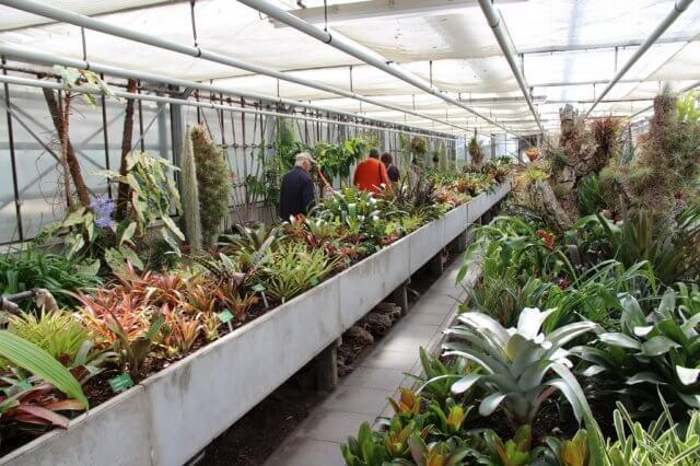 Die Ausstellung findet in den Gewächshäusern des Botanischen Gartens statt. (Archivfoto: © Bastian Glumm)
