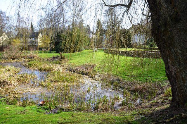 Die langen Zweige der alten knorrigen Weide werden schon bald wieder, neu begrünt, bis in den Teich hängen. (Foto: © Martina Hörle)