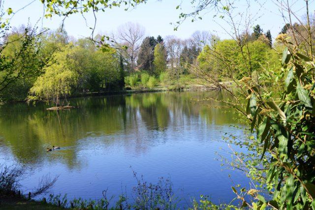 Der Stiehls Teich ist eine grüne Oase, die auch zu Fuß gut erreichbar ist. Der Sportfischerverein Solingen-Hilden hat die Patenschaft übernommen. (Foto: © Martina Hörle)