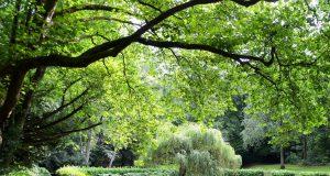 Die Gräfrather Grünanlage bietet Möglichkeiten für kurze Spaziergänge, aber auch für längere Wanderungen. Gut erreichbar liegt sie direkt dem Klingenmuseum gegenüber. (Foto: © Martina Hörle)