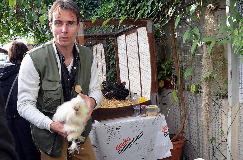 Christian Hankammer, Vorsitzender des Geflügelzuchtvereins, hat zwei weiße Seidenzwerghühner mitgebracht. Diese Rasse hat schwarze Haut und fünf Zehen. (Foto: © Martina Hörle)