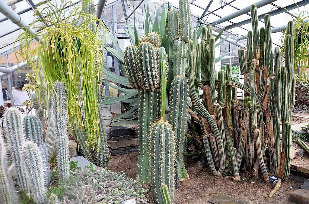 Bei Stamm-Sukkulenten wird die Fotosynthese auf den Stamm verlagert. Die Pflanzen haben sich an extreme Klima- und Bodenverhältnisse angepasst. (Foto: © Martina Hörle)