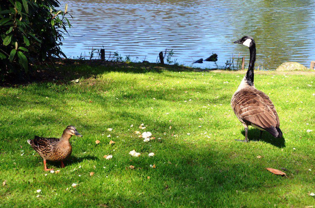 Die gefiederten Bewohner des Parks lassen sich durch die Besucher nicht stören. (Foto: © Martina Hörle)