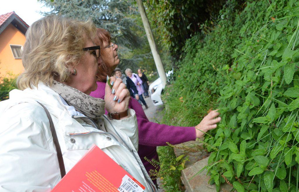(v. li.) Edeltraut Krüger (NABU) und Sibylle Hauke (BUND) wussten viel Interessantes über Pflanzen und Pilze zu berichten. Es war eine vergnügliche und zugleich lehrreiche Wanderung. (Foto: © Martina Hörle)