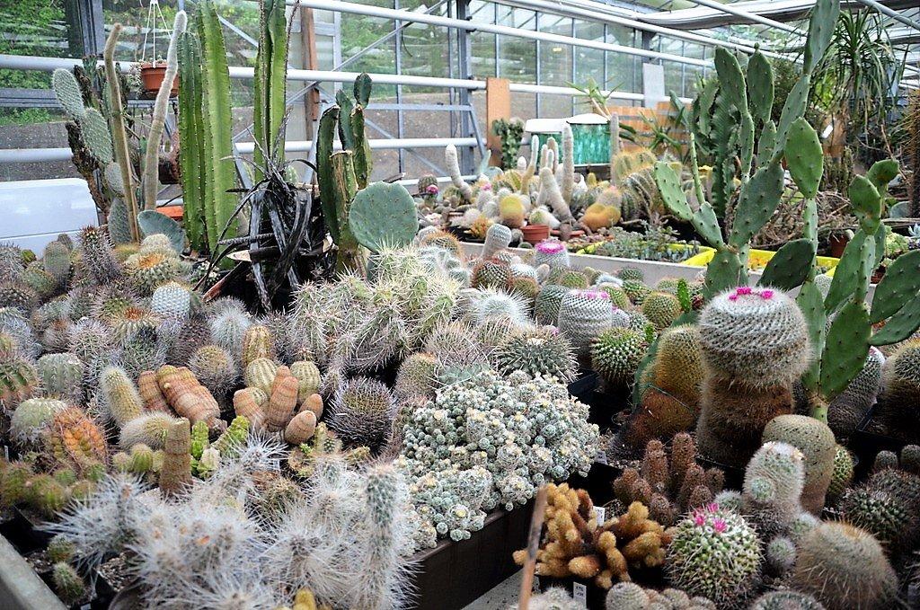 Zwei große Sammlungen von Privat sind dem Bot. Garten gespendet worden. Die 750 Pflanzen werden jetzt bei der anstehenden Umstrukturierung in die vorhandene Ansammlung integriert. (Foto: © Martina Hörle)