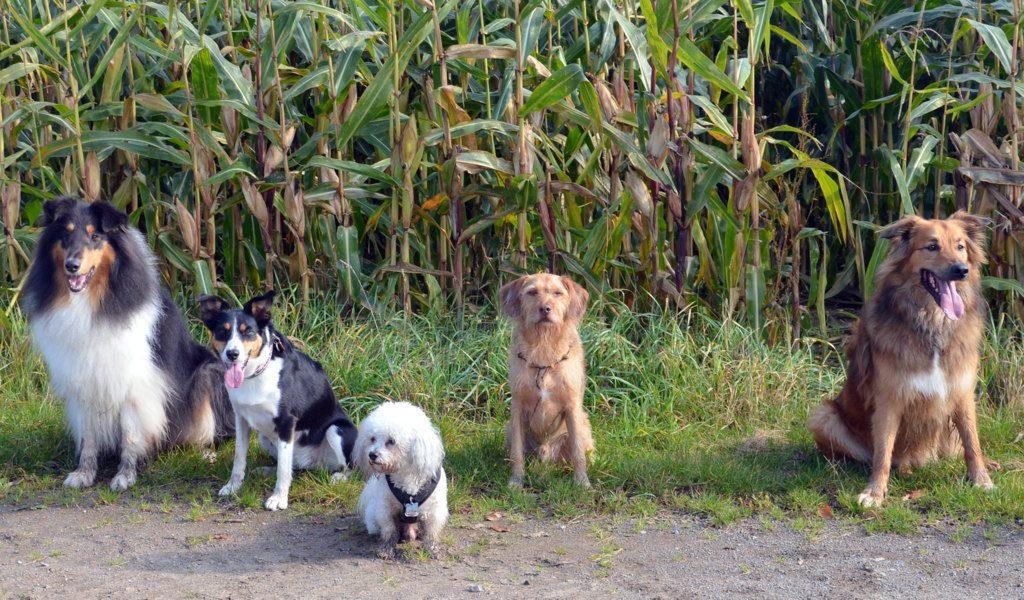Die Vierbeiner der Hunderunde Leverkusen nahmen bereitwillig für ein Gruppenfoto Aufstellung. Die private Hundegruppe war auf einer Erkundungstour durch das schöne Meigen. (Foto: © Martina Hörle)