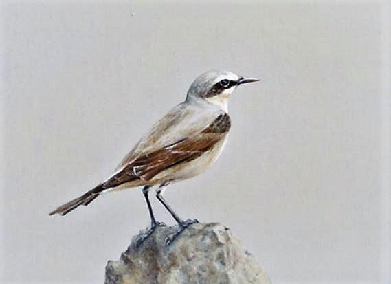 Die kleinen Ansichten der Vögel stehen in reizvollem Kontrast zu den Großformaten. Sie sind ganz detailliert in Öl gemalt. (Foto: © Martina Hörle)