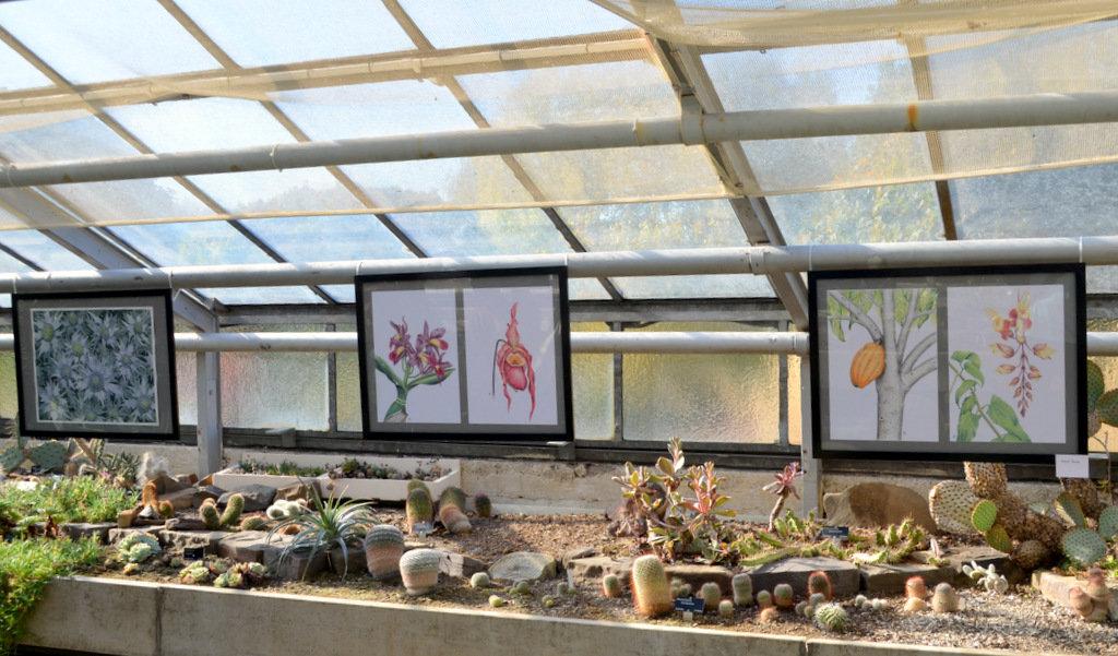 Das Sukkulentenhaus ist ein idealer Platz, um die Bilder zu präsentieren. (Foto: © Martina Hörle)