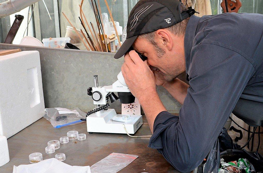Die Besucher nahmen begeistert das Angebot an, die unterschiedlichen Samen mit Hilfe des Binokulars zu betrachten. (Foto: © Martina Hörle)