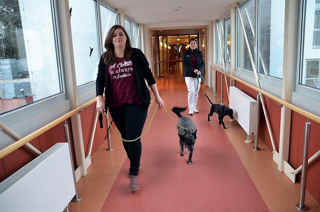 Die vierbeinigen Therapeuten Jockel (li.) und Chap auf dem Weg zu ihrem Einsatz. (Foto: © Martina Hörle)