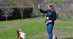 Seit neun Jahren arbeitet Nicole Müller unter dem Namen Solinger Pfoten mit Hunden. Neben dem Gassi-Service bietet sie Mantrailing an, eine Beschäftigung, die Hunden und ihren Besitzern Spaß machen. Hier übt sie gerade mit Puppi, ihrem fünfjährigen Kooikerhondje. Shih Tzu Cliff schaut interessiert zu. (Foto: © Martina Hörle)