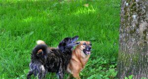 Mina und Balou leben seit neun Jahren zusammen. Sie sind erst vor wenigen Tagen wegen eines Todesfalles im Tierheim Solingen abgegeben worden. (Foto: © Martina Hörle)