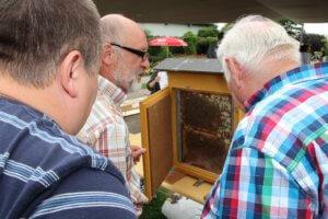 Am Inkertag wird es auch wieder ein Bienenvolk hinter Glas zu bewundern geben. (Archivfoto: © Bastian Glumm)