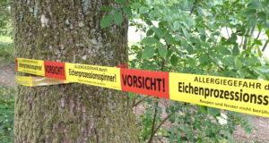 Der Eichenprozessionsspinner hat auch Solingen wieder erreicht. An mehren Stellen im Stadtgebiet wurden bereits Nester gefunden. (Foto: © Stadt Solingen)