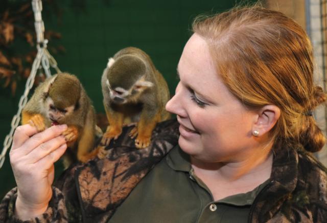 Christina Farke, zoologische Leiterin der Gräfrather Fauna, mit zwei ihrer neuesten Schützlinge. Am Montag sind sieben Totenkopfaffen im Solinger Tierpark eingezogen. (Foto: © Bastian Glumm)