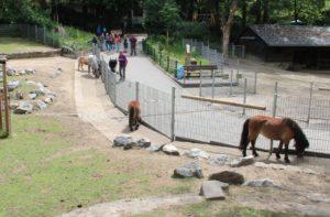 Die Ziegen bleiben lieber noch unter sich, während die vier Ponys in Zaunnähe nach Leckerchen fahnden. (Foto: © B. Glumm)