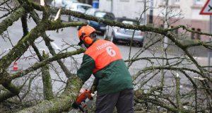 """Sturmtief """"Friederike"""" hat in Solingen seine Spuren hinterlassen. Feuerwehr, THW und Einsatzkräfte der Stadt sind noch mit den Aufräumarbeiten beschäftigt. (Foto: © Das SolingenMagazin)"""
