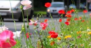 In den nächsten Tagen werden am Frankfurter Damm und an der Neuenkamper Straße die Pflanzen und Wiesenblumen am Straßenrand abgemäht. (Archivfoto: © Bastian Glumm)