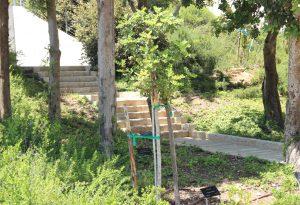 """1965 wurde Fritz Gräbe zum """"Gerechten unter den Völkern"""" ernannt. 1967 pflanzte er einen Baum in der """"Allee der Gerechten"""" in Yad Vashem in Jerusalem. Der Baum wächst dirt noch heute. (Archivfoto: © B. Glumm)"""
