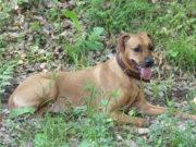 Am 21. Januar verschickt die Stadt Solingen knapp 9.000 Hundesteuer-Jahresbescheide für insgesamt 10.200 angemeldete Hunde. Den Bescheiden sind auch die neuen Hundesteuermarken beigefügt. (Foto: © Bastian Glumm)