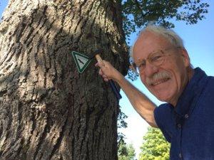 Enrique Pless, Vorsitzender des Beirats der Unteren Landschaftsbehörde, legte jetzt persönlich Hand an, um die beiden markanten Bäume mittels dreieckigem Schildchen als Naturdenkmal zu kennzeichnen. (Foto: © Stadt Solingen)