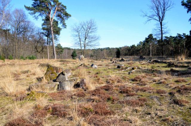 Die ursprüngliche Landschaft der Ohligser Heide soll Zug um Zug wieder hergestellt werden, weshalb Rodungsarbeiten druchgeführt werden. (Archivfoto: © Martina Hörle)